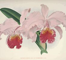 Iconagraphy of Orchids Iconographie des Orchidées Jean Jules Linden V8 V9 1895 0006 by wetdryvac