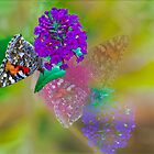 Butterfly Memories by Diane Schuster