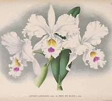 Iconagraphy of Orchids Iconographie des Orchidées Jean Jules Linden V15 1899 0214 by wetdryvac