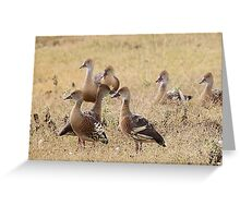 Plumed Whistling Duck Greeting Card