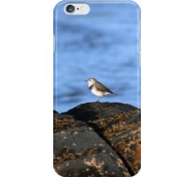 Red Necked Stint iPhone Case/Skin