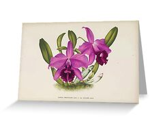 Iconagraphy of Orchids Iconographie des Orchidées Jean Jules Linden V14 1898 0088 Greeting Card