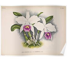 Iconagraphy of Orchids Iconographie des Orchidées Jean Jules Linden V14 1898 0128 Poster