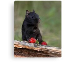 Actually, No ...I Don't Share / Black Eastern Chipmunk Metal Print