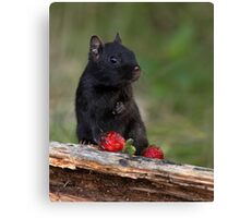 Actually, No ...I Don't Share / Black Eastern Chipmunk Canvas Print
