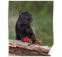 Actually, No ...I Don't Share / Black Eastern Chipmunk Poster