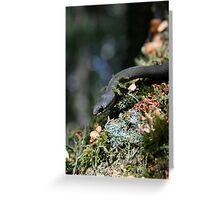 White Lipped Snake Greeting Card
