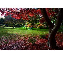 Japanese Maple Photographic Print
