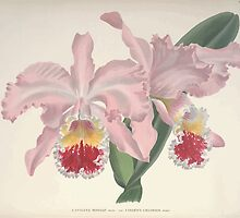 Iconagraphy of Orchids Iconographie des Orchidées Jean Jules Linden V10 V10 1897 0013 by wetdryvac