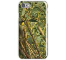 Yellow Throated Honey Eater iPhone Case/Skin