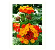 Small Bunches of Flowers Art Print