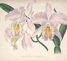Iconagraphy of Orchids Iconographie des Orchidées Jean Jules Linden V4 V5 1893 0189 by wetdryvac