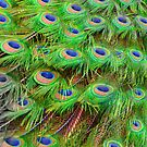 Bright Green Peacock Feathers by Melissa Park
