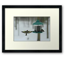 Lots of Room At The Feeder! Framed Print