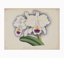 Iconagraphy of Orchids Iconographie des Orchidées Jean Jules Linden V15 1899 0130 Kids Tee