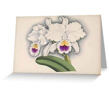 Iconagraphy of Orchids Iconographie des Orchidées Jean Jules Linden V15 1899 0130 Greeting Card