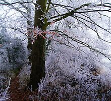 Winter Colour by Martin Carr