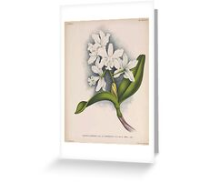 Iconagraphy of Orchids Iconographie des Orchidées Jean Jules Linden V15 1899 0054 Greeting Card