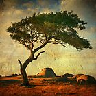 Tree on Textures - Dog Rocks by Hans Kawitzki