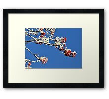 Mountain Ash In Frost Framed Print