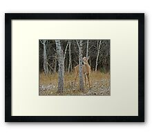 The Kissing Tree Framed Print
