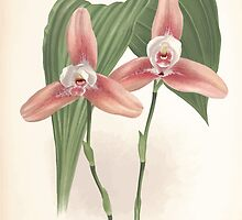 Iconagraphy of Orchids Iconographie des Orchidées Jean Jules Linden V9 V9 1894 0134 by wetdryvac