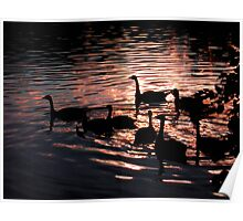 Geese Silhouette on lake Poster