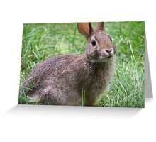 Funky Rabbit Greeting Card