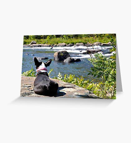 Dog watching river Greeting Card