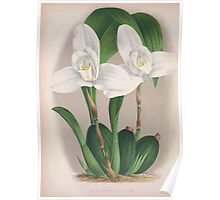 Iconagraphy of Orchids Iconographie des Orchidées Jean Jules Linden V4 1888 0046 Poster