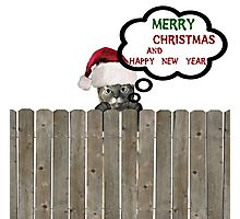 merry christmas cat Photographic Print