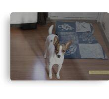 Dog. Metal Print