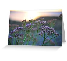 Scenic Wildflowers Against Sunset Greeting Card