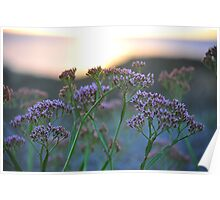 Scenic Wildflowers Against Sunset Poster