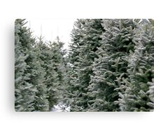 Dreaming of a white Christmas... Canvas Print