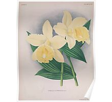 Iconagraphy of Orchids Iconographie des Orchidées Jean Jules Linden V15 1899 0034 Poster