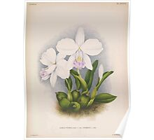 Iconagraphy of Orchids Iconographie des Orchidées Jean Jules Linden V14 1898 0018 Poster