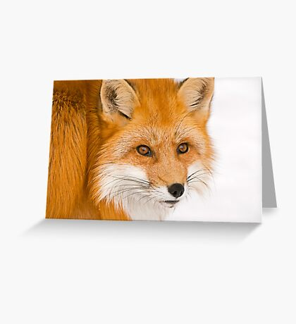 Foxey Greeting Card