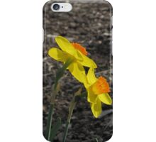 Golden Daffodils iPhone Case/Skin