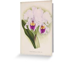 Iconagraphy of Orchids Iconographie des Orchidées Jean Jules Linden V14 1898 0168 Greeting Card