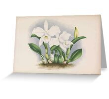 Iconagraphy of Orchids Iconographie des Orchidées Jean Jules Linden V14 1898 0010 Greeting Card