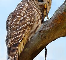 Snake On The Menu / Barred Owl by Gary Fairhead
