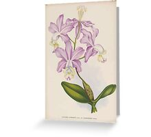 Iconagraphy of Orchids Iconographie des Orchidées Jean Jules Linden V14 1898 0196 Greeting Card