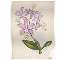 Iconagraphy of Orchids Iconographie des Orchidées Jean Jules Linden V14 1898 0196 Poster