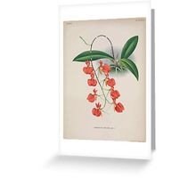 Iconagraphy of Orchids Iconographie des Orchidées Jean Jules Linden V15 1899 0010 Greeting Card