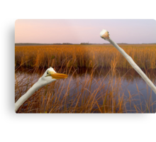 """Birds Eye View"" - great egrets sneak into the picture Metal Print"