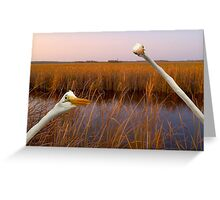 """Birds Eye View"" - great egrets sneak into the picture Greeting Card"