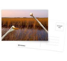 """Birds Eye View"" - great egrets sneak into the picture Postcards"