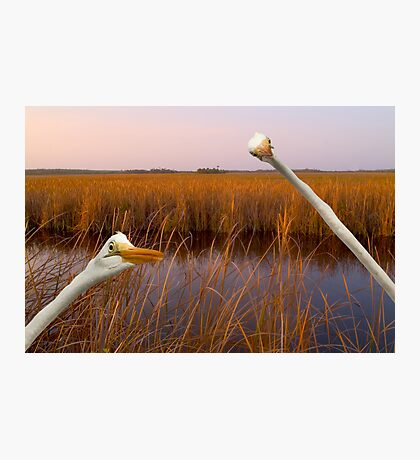 """""""Birds Eye View"""" - great egrets sneak into the picture Photographic Print"""