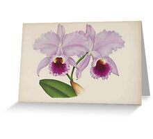 Iconagraphy of Orchids Iconographie des Orchidées Jean Jules Linden V14 1898 0116 Greeting Card